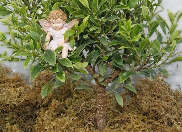 Ficus, Tiny Limey