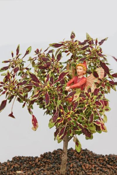 Coleus, Mini Autumn Leaf