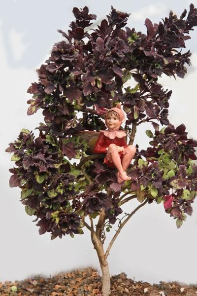 Coleus, Mini Red Maple