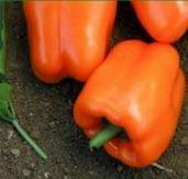 Pepper, Orange Blaze