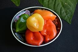 Pepper, Trinidad Scorpion