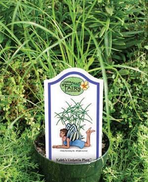 Claire's Umbrella Plant