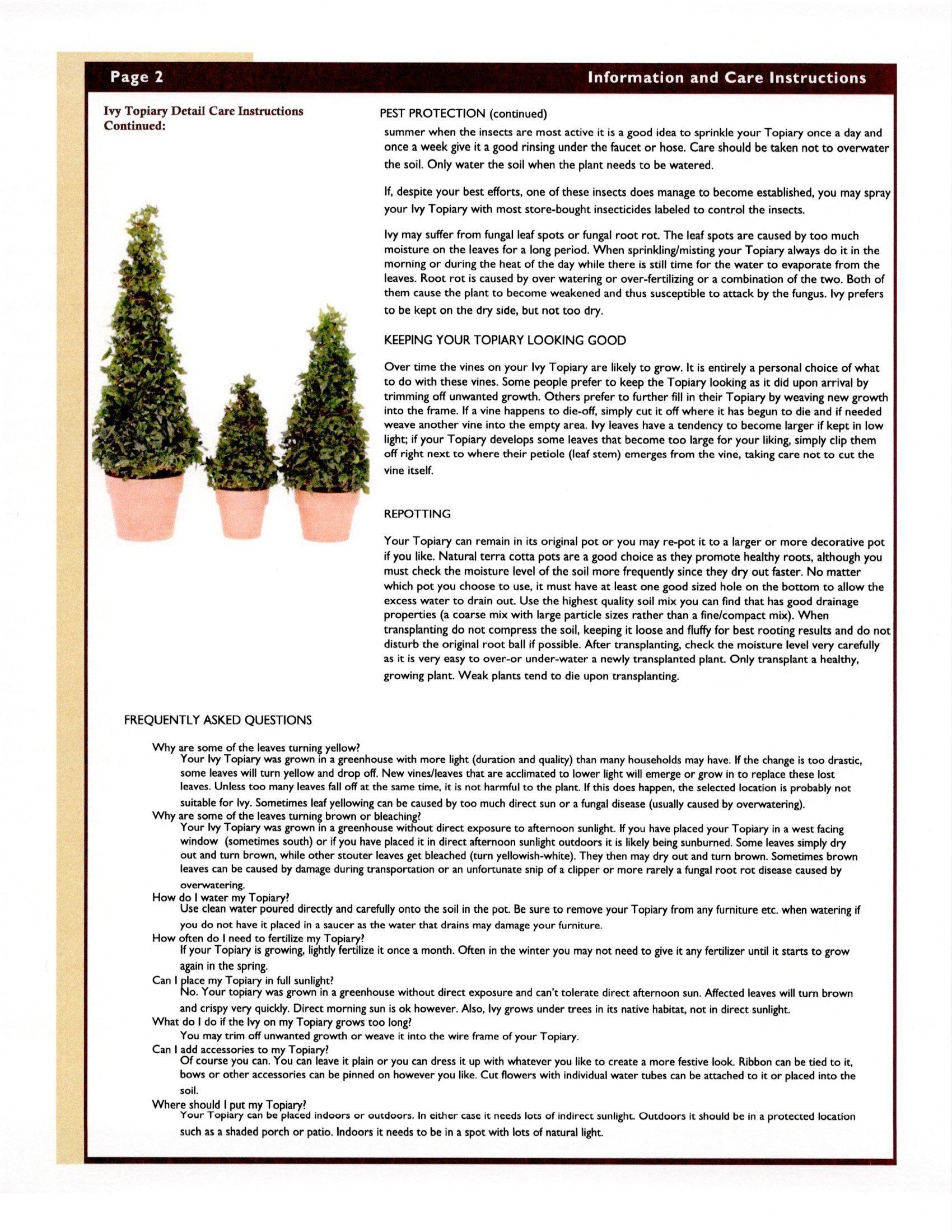 Wolfs Blooms And Berries Ivy Topiary Information Care