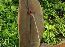 Henri Standing Leaf Fountain