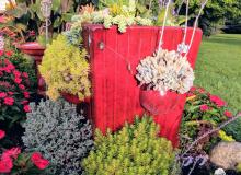 Sue's succulent planter