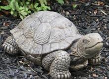 Massarelli Turtle