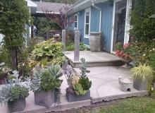 Sheila's backyard