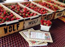 Wolf Berries.jpg