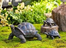 Evergreen Tortoise Family