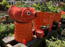 Fishy in the Perennial Area