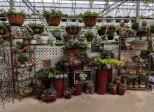 Trendy House Plants