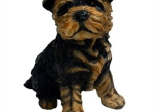Micheal Carr Yorkie