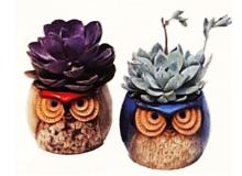 Theuts Owls