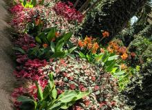 Longwood Gardens - PA 2019