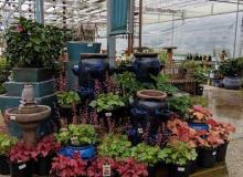 Perennial Area