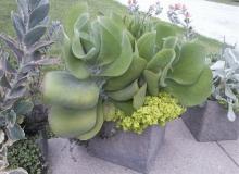 Sheila's Flap Jack Succulent Planter